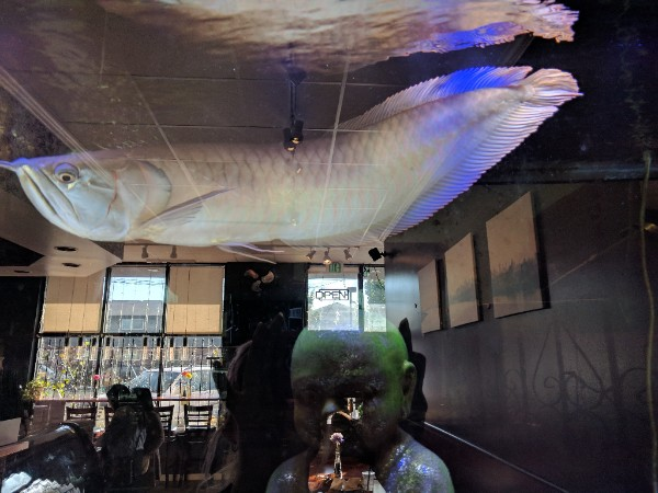 A silver Arowana fish in an aquarium. The green head of a Buddha statue and a cafe interior are reflected in the glass.