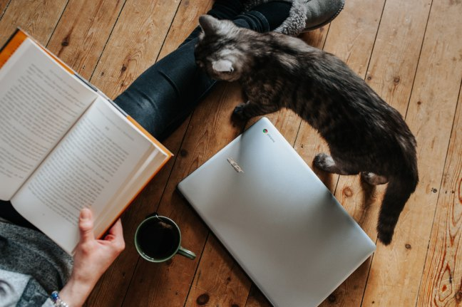 a hand holding a book next to a cup of tea, a laptop, and a cat