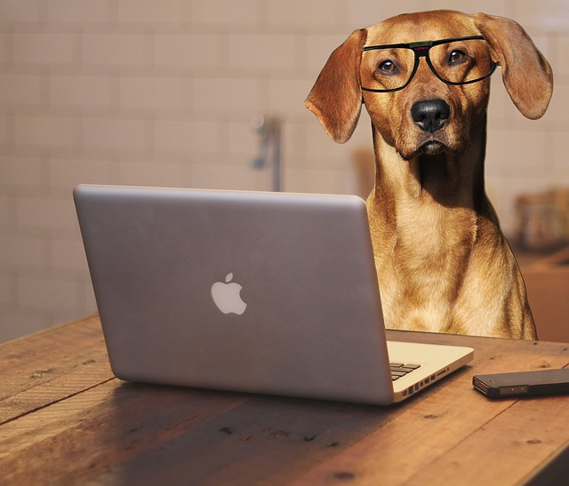 A yellow dog wearing glasses in front of a laptop.